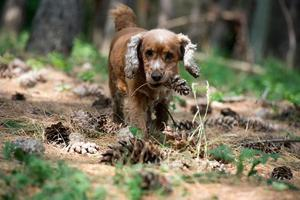 happy puppy dog running to you on the forest background