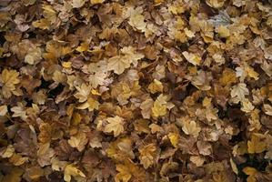 textura de otoño foto