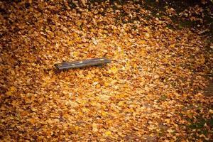 otoño otoño paisaje. banco y hojas en el parque de la ciudad.