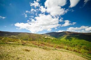 prairies de fleurs vertes dans les Carpates