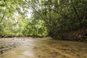 Calm river in tropical rainforest