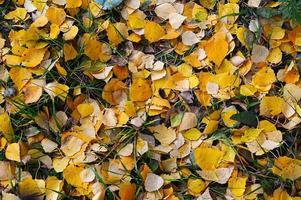 natuurlijke achtergrond van gele herfstbladeren