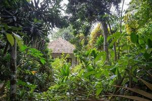 The jungle in the vicinity of Bentota. photo