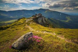 Magic pink rhododendron flowers in the mountains photo
