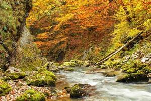 Galbena canyon autumn photo