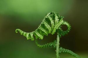 Young sprouts of fern blossom.