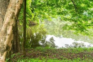 naturaleza en chiang mai 4 foto