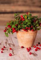 Fresh cranberries in a pot