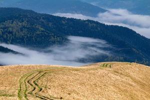 Ruts in the Carpathian mountains photo