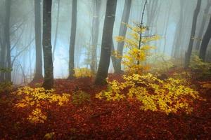 Colors of fall into the fog photo