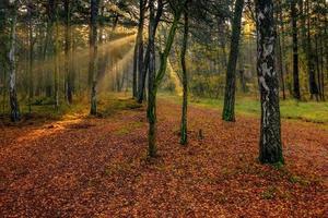 mooie kleurrijke herfst in zonnige dag