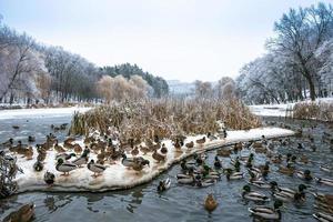 hermoso día de invierno en el parque cerca del lago congelado con