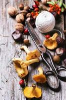 Chanterelle mushrooms with old scissors