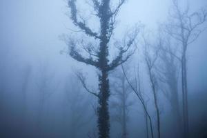 arbres dans le brouillard
