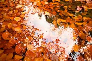 Fallen first colorful leaves bellow mirror water level photo