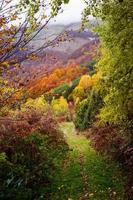 montaña de colores otoñales