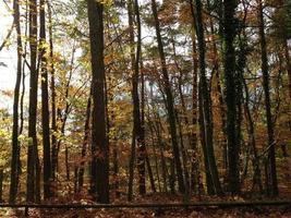 Herbstwald photo