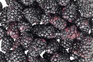 scattered blackberries