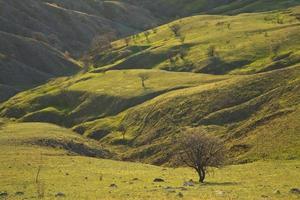 Green valley between the hills