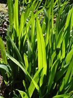 capas de verde