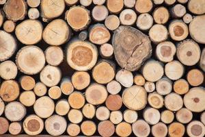 stump texture