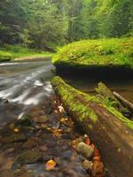 Trunk above muddy spring water of mountain stream photo