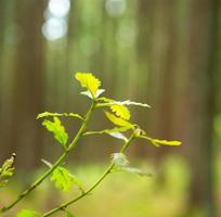 Green tree leaves isolated. photo