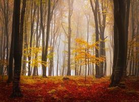 Dark yellow mist photo