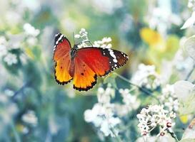 Vintage butterfly and  flower in spring photo