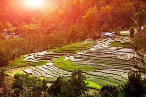 vila e terraços de campo de arroz