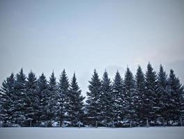 Winter trees in the snow. photo