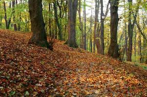 otoño en un parque foto