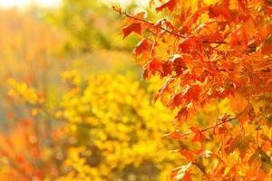 hojas de otoño brillantes en el entorno natural