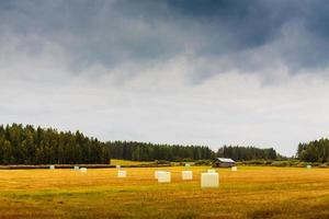 rollos de heno en el campo de otoño