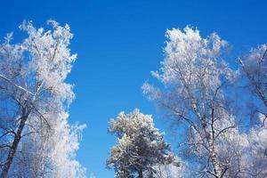 topos de árvores congelados no fundo do céu