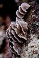 mashrooms on log photo