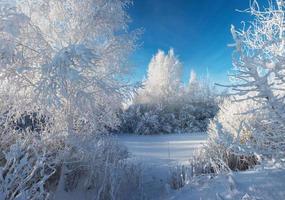 cristal claro mañana de invierno