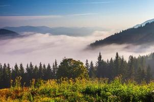 Beautiful summer landscape in the mountains photo