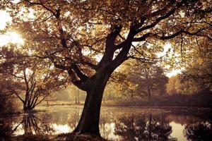 colorido paisaje otoñal fondo de naturaleza.