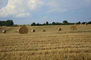 montes de feno em um campo