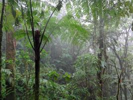 forêt tropicale du costa rica
