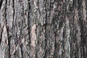 Baumrindenbeschaffenheit