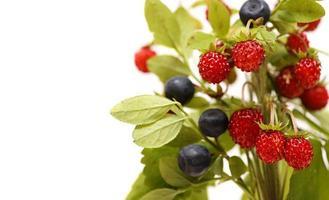 fresas y arándanos. ramo de bayas, hojas de fresa silvestre aislado foto