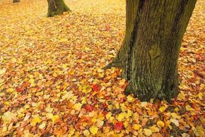 hojas en el parque