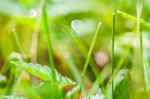 Blurred abstract background with green grass and bokeh