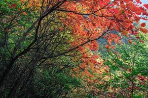 mountains and leaves photo