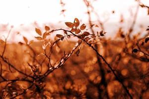 puesta de sol en el otoño