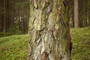 Alpine undergrowth