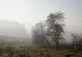 Autumnal landascape photo