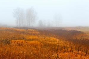 Autumn wood.Fog background.